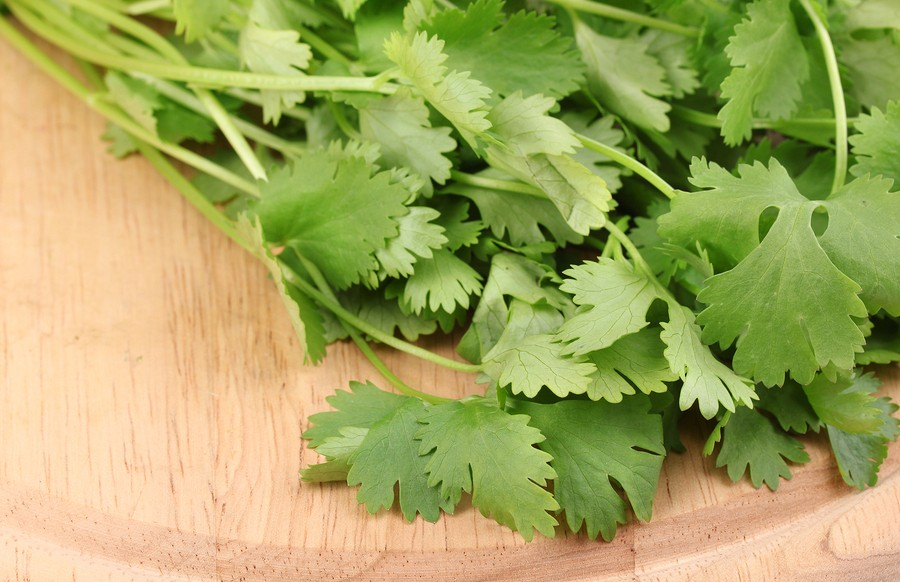 Simply Cilantro: Fresh Pico De Gallo Recipe  {How to store fresh Cilantro }